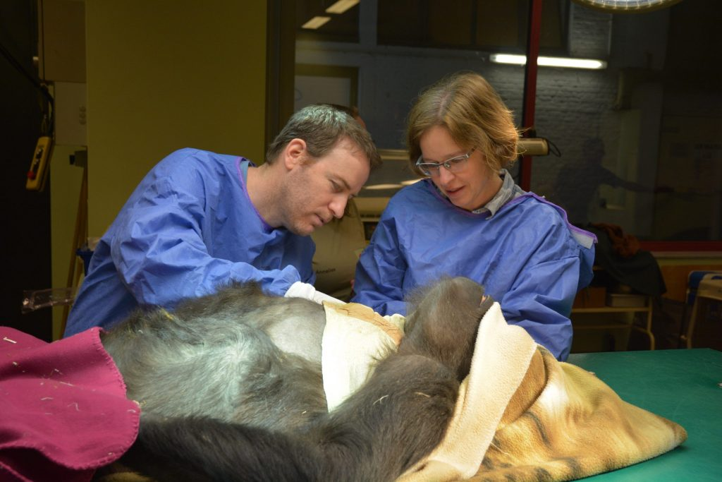 Vets examining pet in a surgery hall