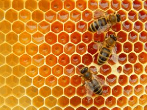 Bee hive for landing page